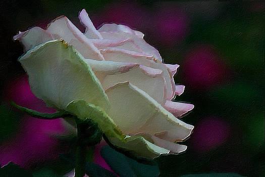 Rose by Saibal Ghosh