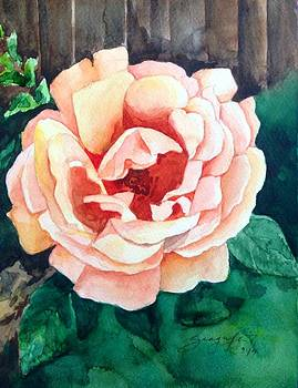 Rose by Shagufta Mehdi