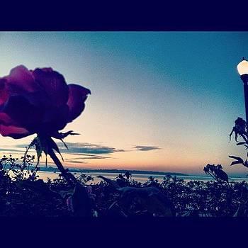 #rose #sunrise #boully by Kahsha Ward