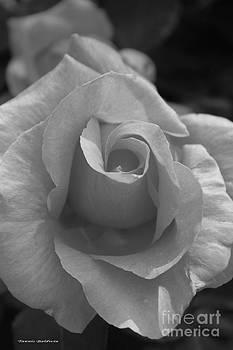 Tannis  Baldwin - Rose