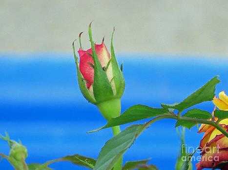 Rosebud by ChelsyLotze International Studio