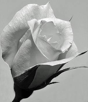 Rosebud In Black andWhite by Joan Powell