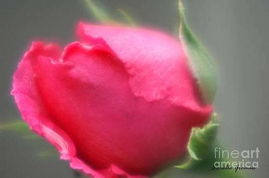 Rosebud by Lorelle Gromus