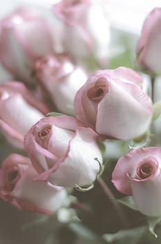 Rosebud by Mary Carver