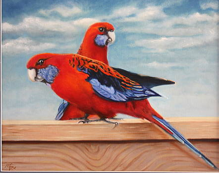 Rosellas by Mary Ann Fox