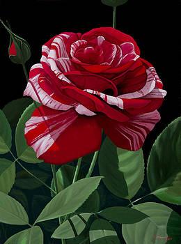 Roses #3 by Michael Putnam
