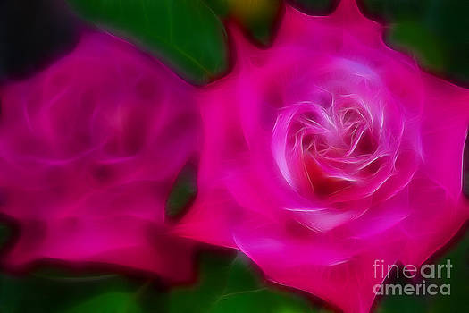 Gary Gingrich Galleries - Roses 6235-Fractal