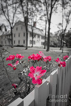Edward Fielding - Roses along a picket fence Deerfield Massachuesetts