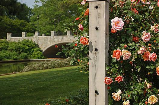 Steve Breslow - Roses and Bridge