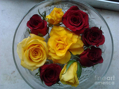 Yellow Roses by Chitra Helkar