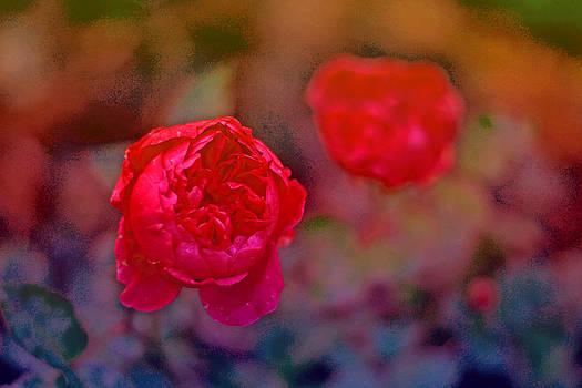 Roses II by Nadeesha Jayamanne