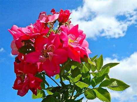Roses in the Sky  by Randy Rosenberger
