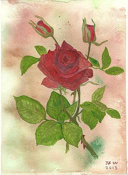 Roses by John Williams