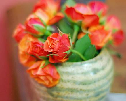 Lisa Phillips - Roses