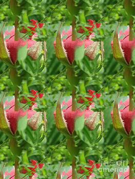 Roses Multiply by Dana Hermanova