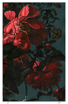 Roses by Philip Slagter