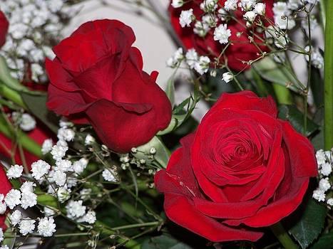 Roses by Susan Turner Soulis