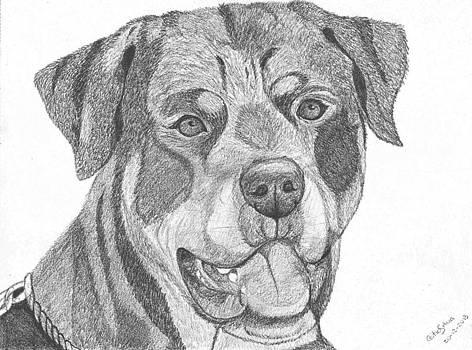 Rottweiler by Catia Silva