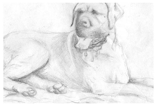 Rottweiler by Rebecca Christine Cardenas