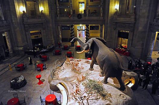 Jonathan E Whichard - Rotunda Smithsonian Museum of Natural History Washington District of Columbia