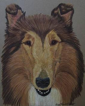Bearded Collie by Anita Putman
