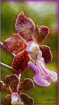 Roy Foos - Rough Neighborhood Orchid