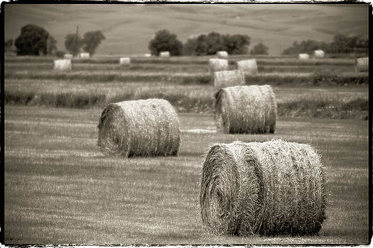 John McArthur - Round Bales in the Field