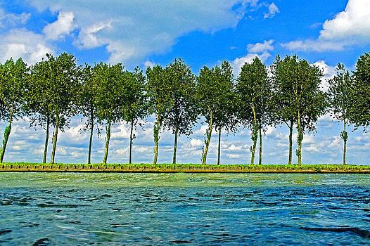 Dennis Cox - Row of Poplars