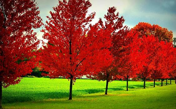 Row Of Red by Lolly M