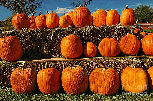 Rows Of Pumpkins by Kathleen Struckle