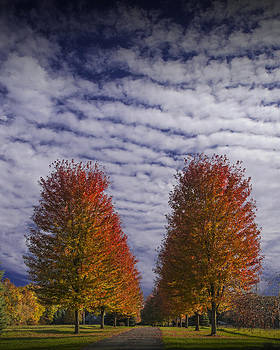 Randall Nyhof - Rows of Red Autumn Trees with Cirus Clouds