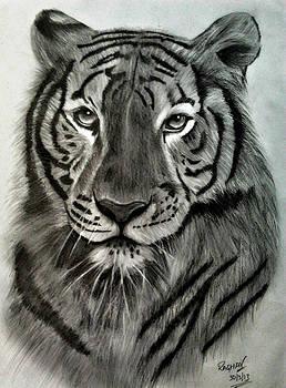 Royal Bengal Tiger's pride by Raghav Ram