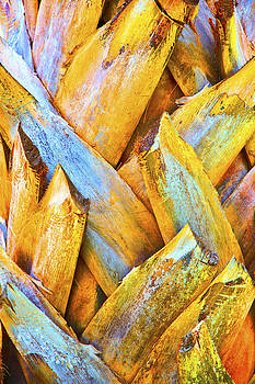 Kantilal Patel - Royal Coconut Palm Bark