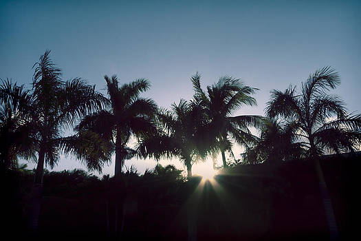 Royal Palm Sunset by Chris Reed