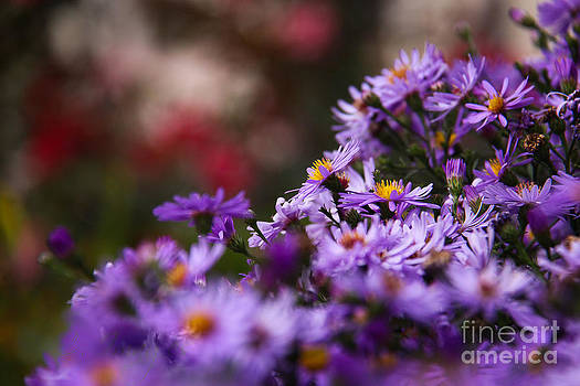 Royal Petals by Charys Photography