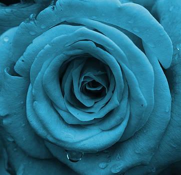 Royal Rose by April Wietrecki Green