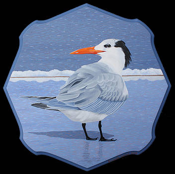 Royal Tern by Amanda  Lynne