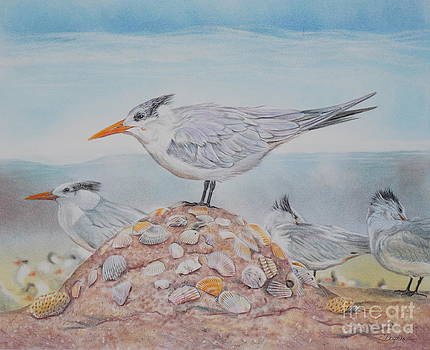 Royal Tern by Gail Dolphin
