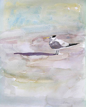 Royal Tern  by Julianne Felton
