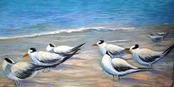 Royal Terns by Teresita Hightower