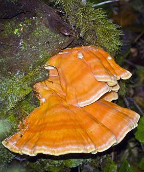 Ruby Beach Fungus by Greg Reed