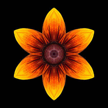 Rudbeckia I Flower Mandala by David J Bookbinder