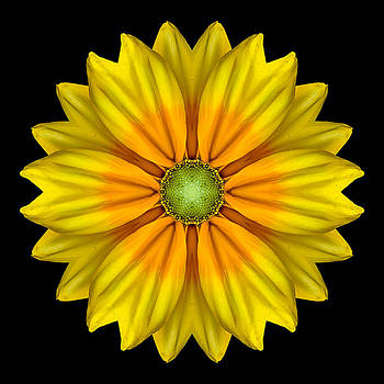 Rudbeckia Prairie Sun I Flower Mandala by David J Bookbinder