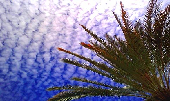 Ruffled Sky with Palm by Brian Hubmann