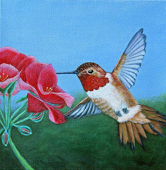 Rufous Hummingbird by Fran Brooks