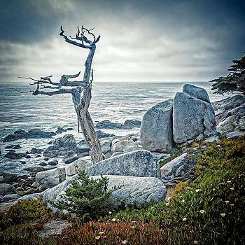 Rugged Coast by Bill Boehm