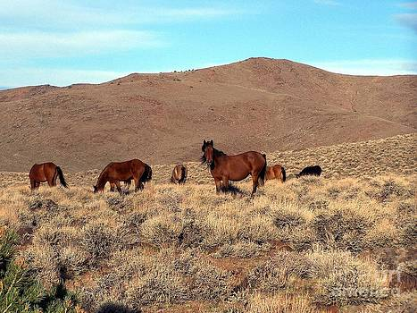 Rugged Northern Pine Nut Mountains Band of Bays by Craig Downer