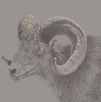 Rugged Ram by Viv Griffiths