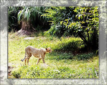 Walter Herrit - Run Cheetah Run 0 to 60 in 3 Seconds