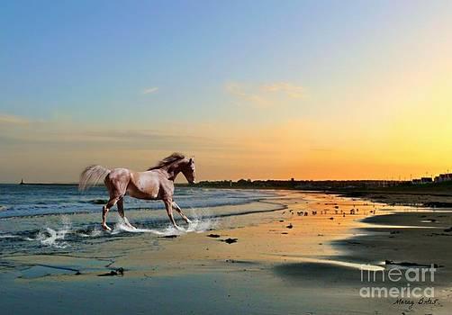 Run Like the Wind by Morag Bates